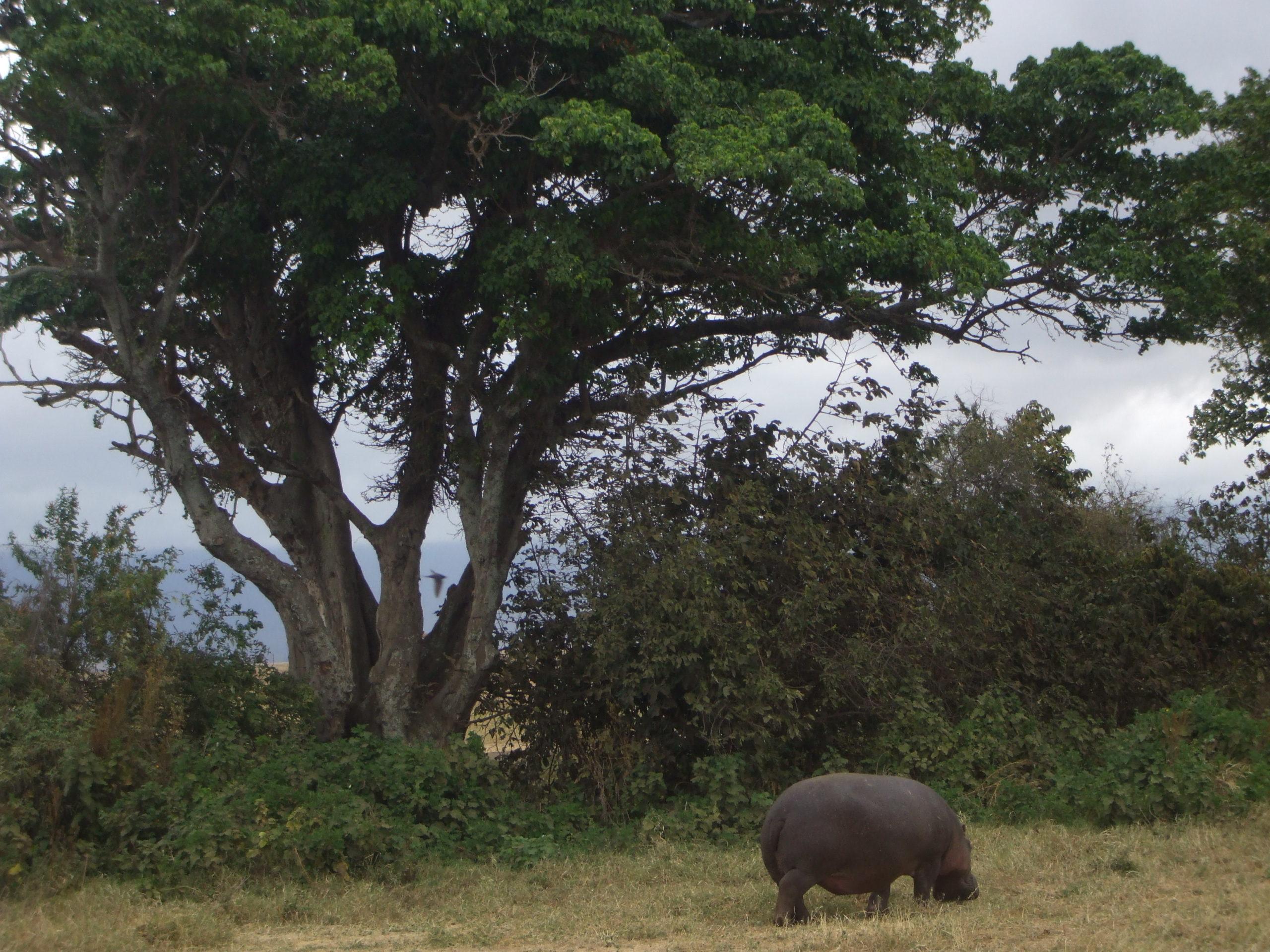 Kenia y Tanzaniav